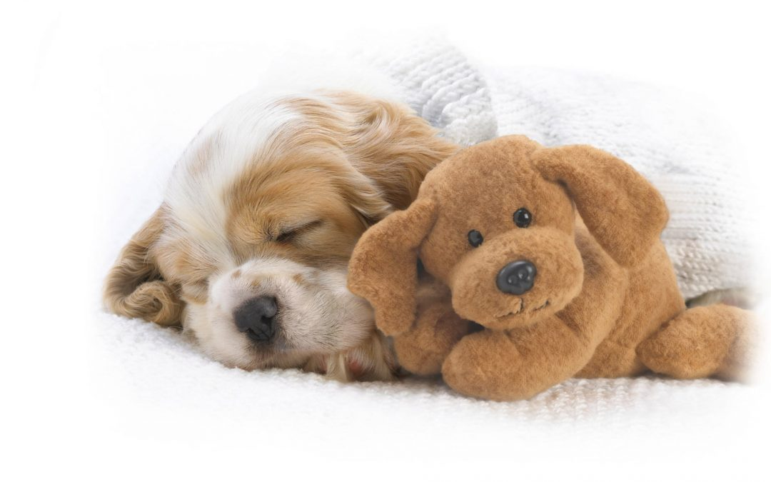 Tips To Treat Separation Anxiety In Dogs