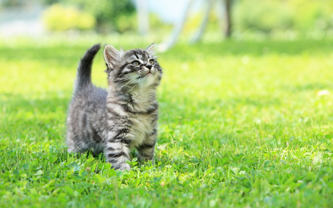 Stray Cats in Are a Bigger Issue Than You Think Please Spay and Neuter Your Cats