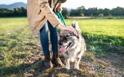 Dog Walking for Seniors: The Benefits and Risks