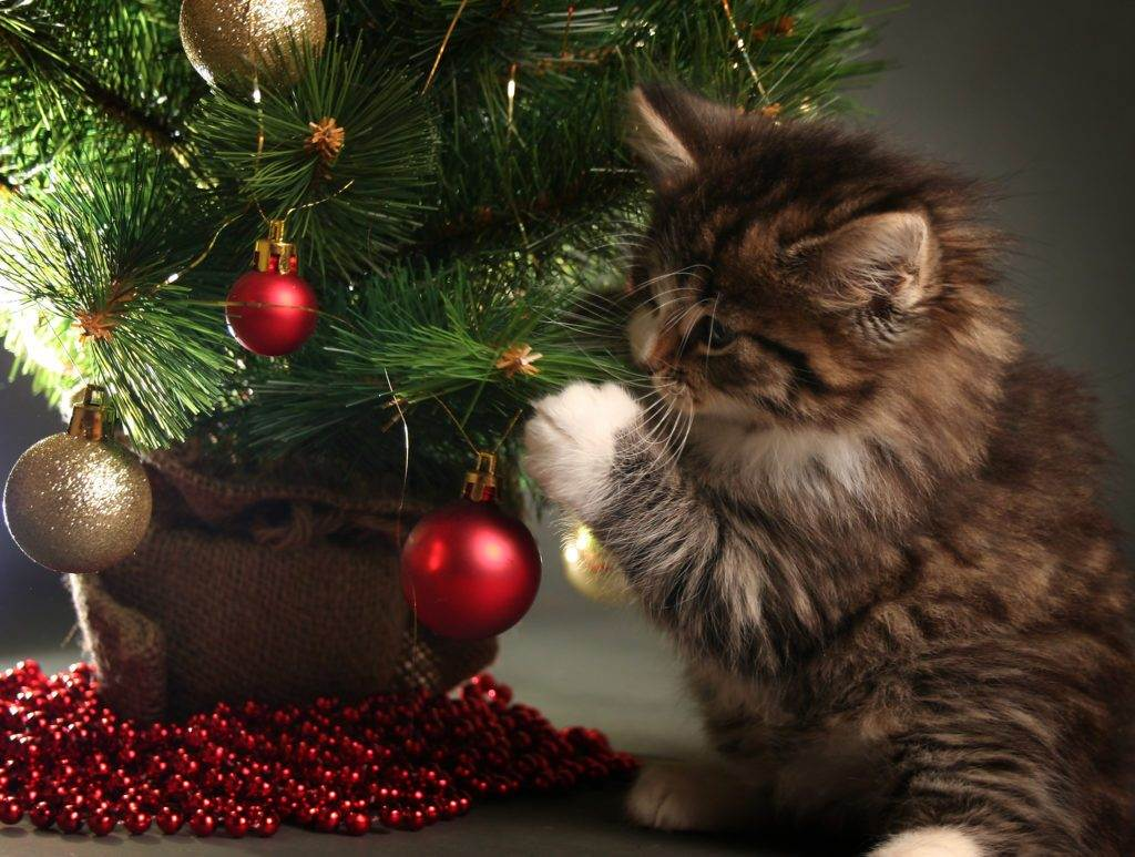 How To Keep Your Cat From Destroying Your Christmas Tree
