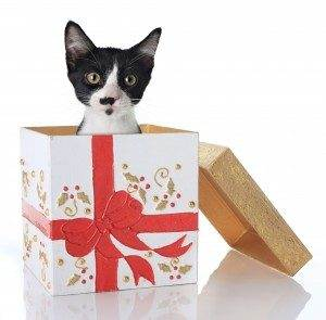 Gifts Your Pet Would Love for Christmas - Love and Kisses Pet ...