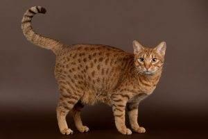Cat   Cat Sitting Indian Trail