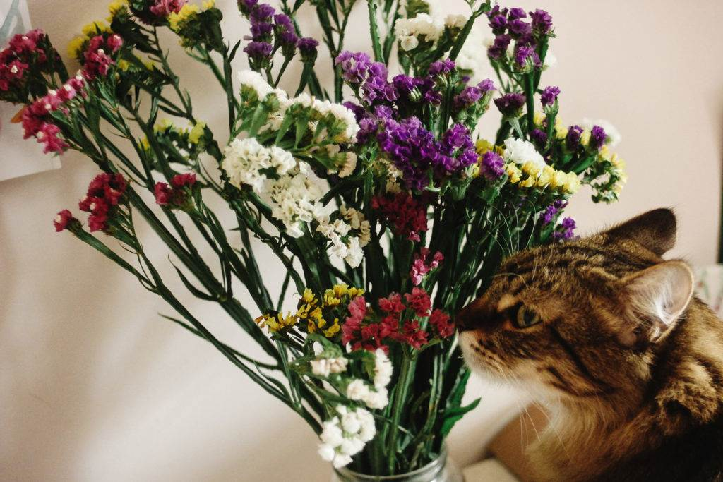 flowers-and-cat-1024x683 - Love and Kisses Pet Sitting Indian Trail, NC