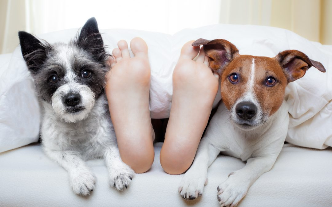 What To Do If Your Dog Is Keeping You Awake At Night?