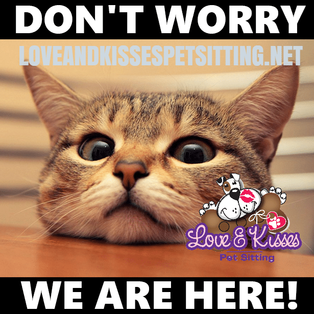 Need a Cat Sitter? Look no Further. Love and Kisses Pet Sitting is Here For all Your Cat Sitting Needs