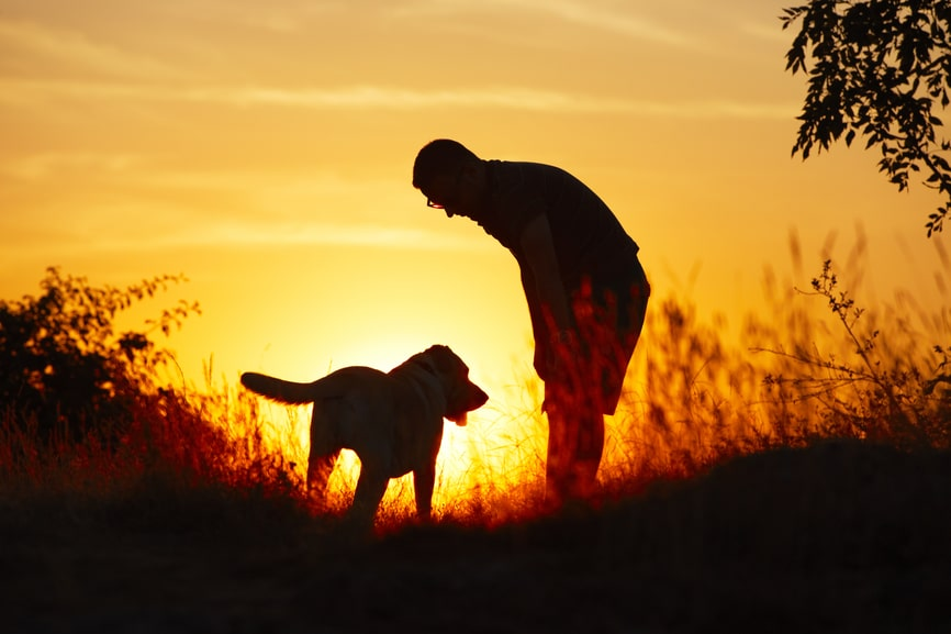 Training Tips Every Canine Lover Should Know