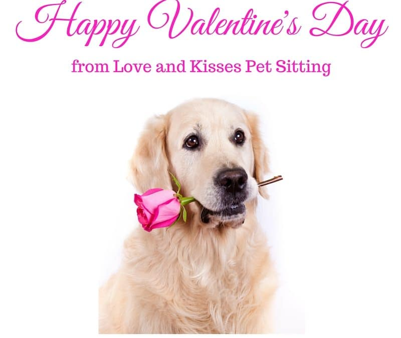 Top 8 Ways To Spend Valentine's Day With Your Dog/ Cat