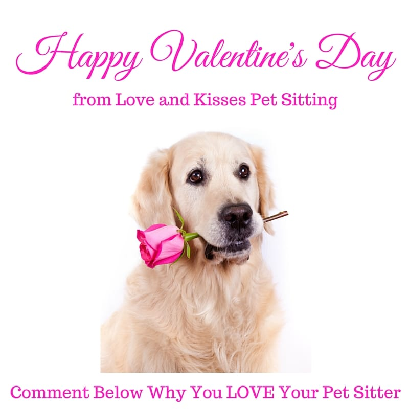 top 8 ways to spend valentine u0026 39 s day with your dog   cat