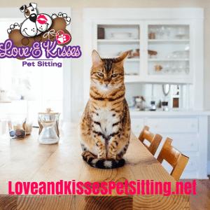 Find a Local Pet Sitter