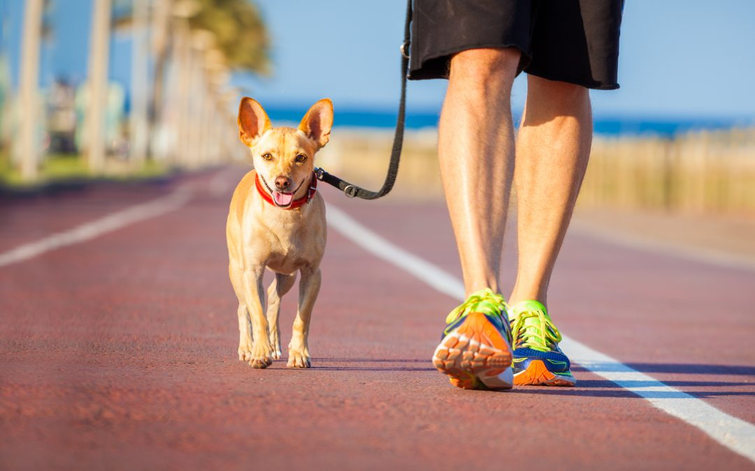 Benefits to Walking Your Dog after a Thanksgiving Day Meal