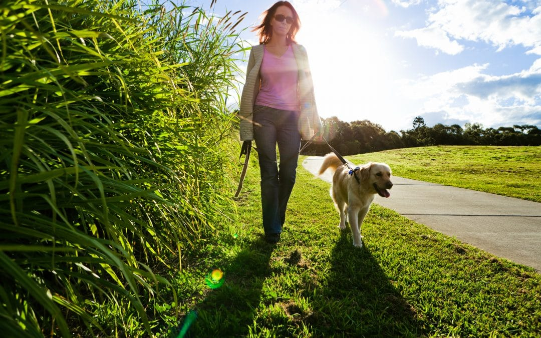 4 Benefits of Daily Dog Walking that People Never Talk About