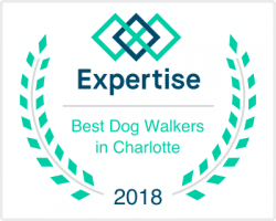 NC Charlotte Best Dog Walkers