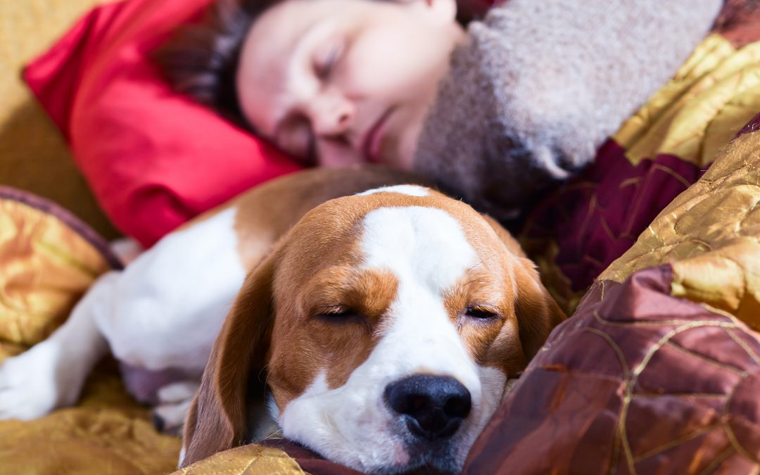 Perfect Pets to Keep in Your College Dorm