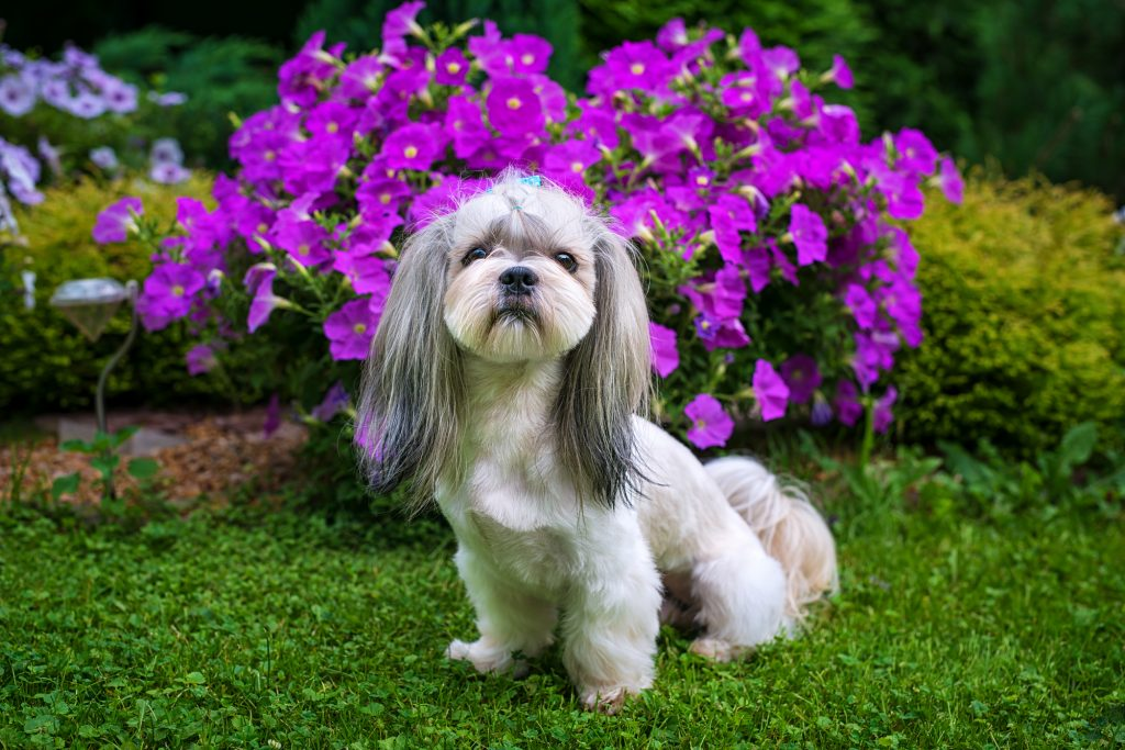 Protecting Your Dog From The Dangers In Your Garden Love