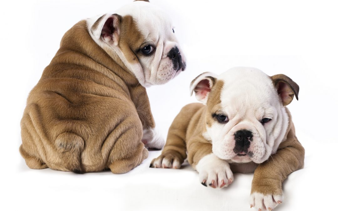 Puppies: The First Year, What to Expect