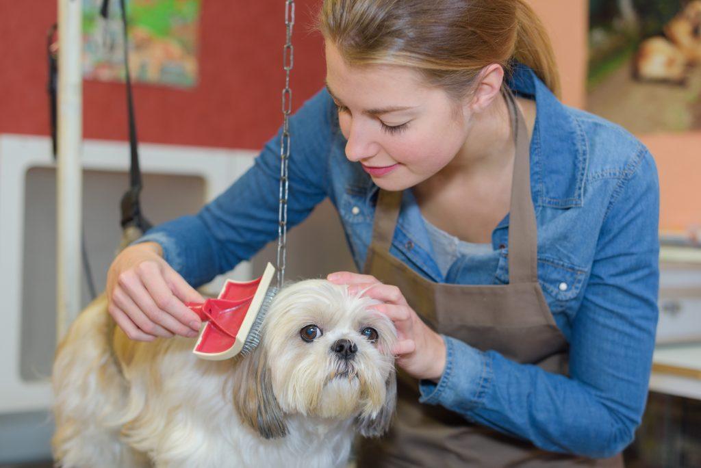 Dog Grooming Waxhaw Nc