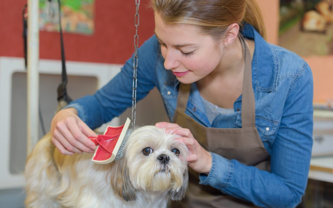 Essential Items You Should Have To Groom Your Pets At Home