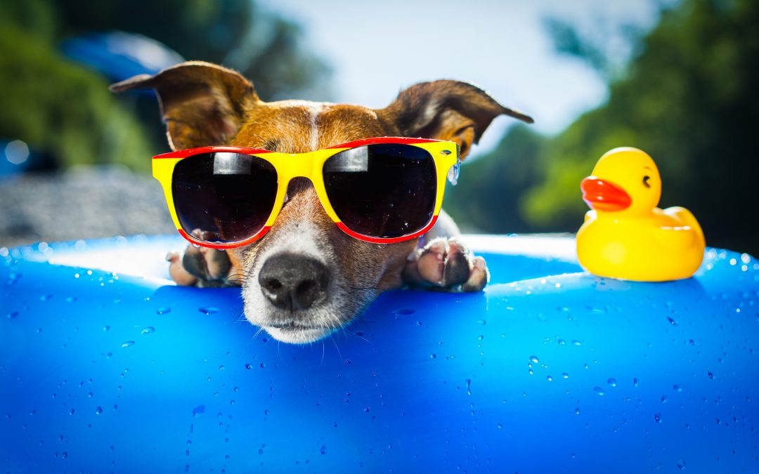 Tips for Enjoying an Awesome Vacation with Your Dog