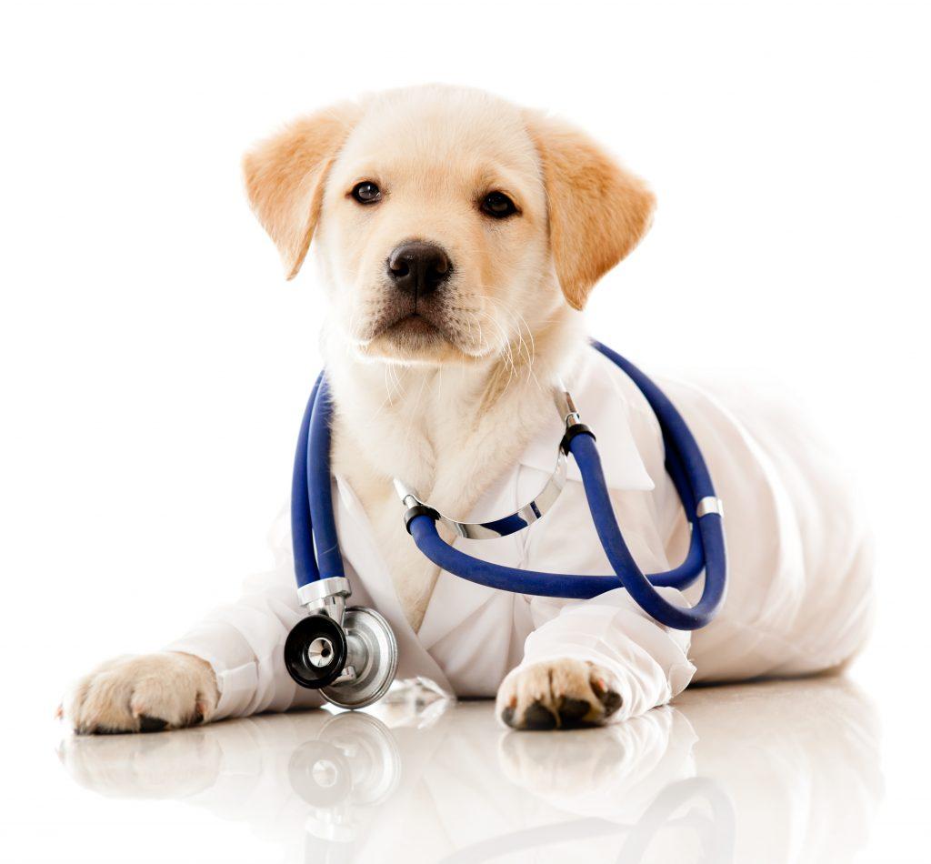 Image result for dog vet