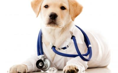 Common Pet Health Issues and How to Treat Them