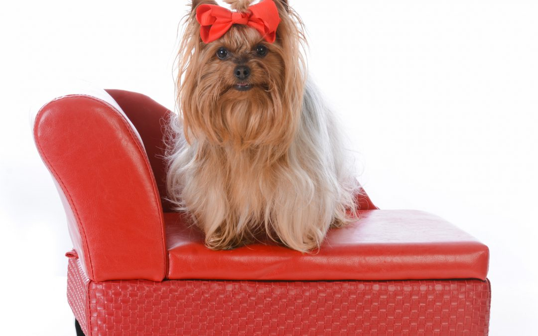 5 Dog Products We Couldn't Live Without