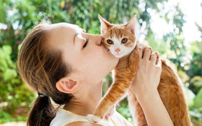 Cat Care Professional For Cat Sitting