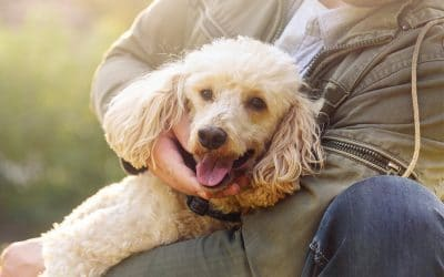Happy Home Away from Home_ Finding a Caring Kennel Facility for Your Pet