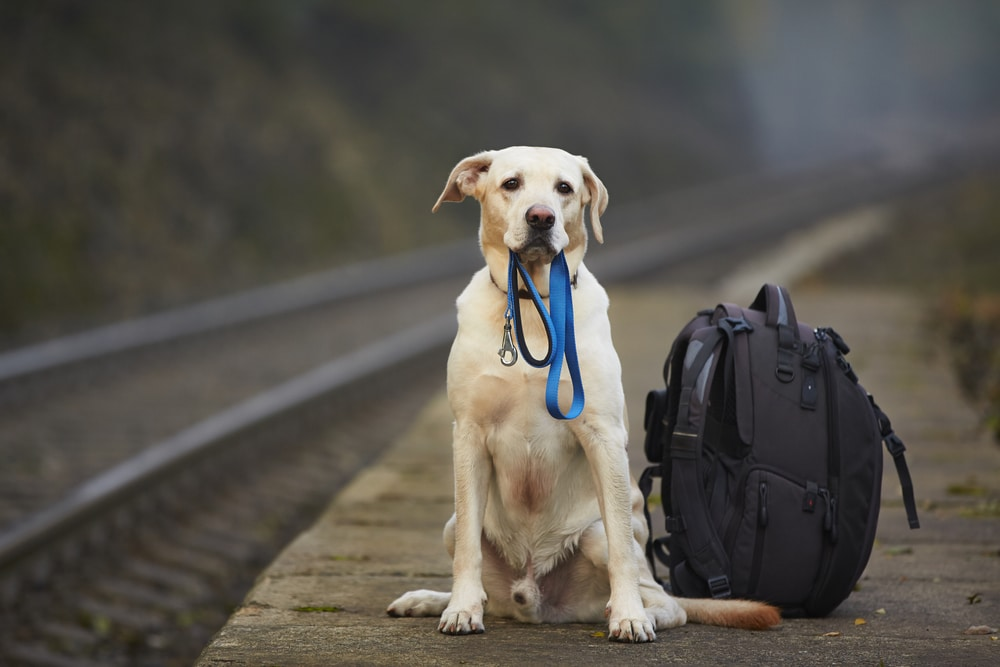 5 Safety Tips You Should Know While Traveling With Pets