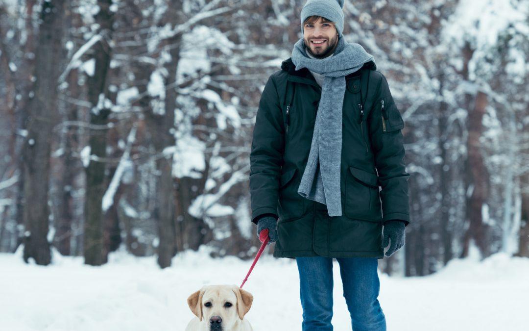 Can Snow Ice Salt Hurt My Dog's Paws?