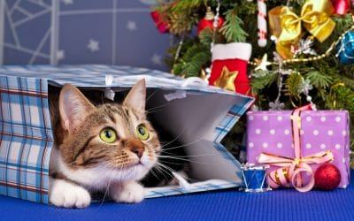 Christmas Gift Ideas for Cat Lover