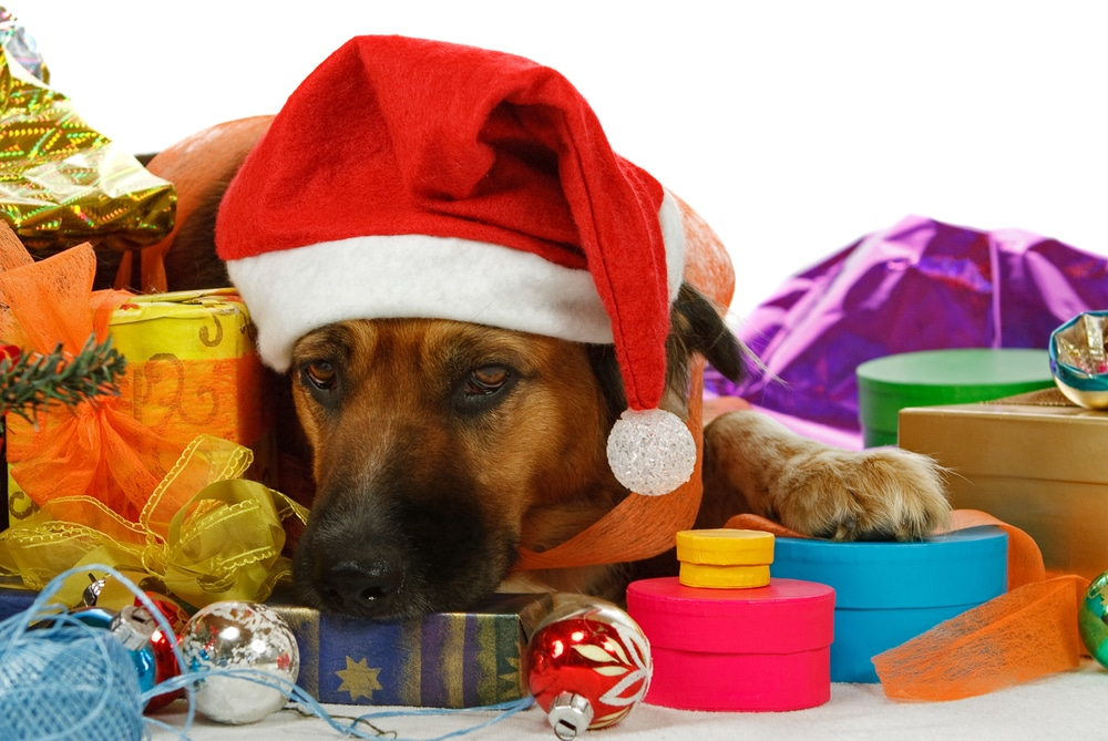 5 of The Best Dog Toys on Amazon for Christmas
