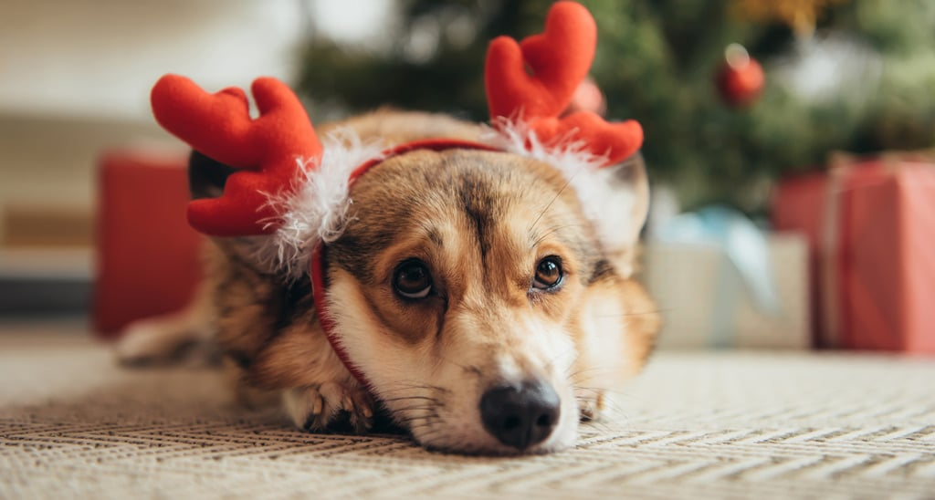 7 Holiday-Season Dog Dangers to Avoid