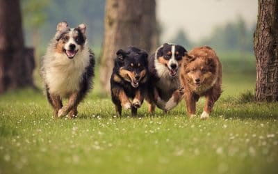Best Dog Breed for a family