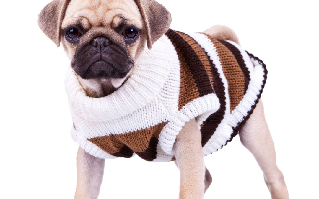 Selecting Comfortable Dog Clothes for Your Pet