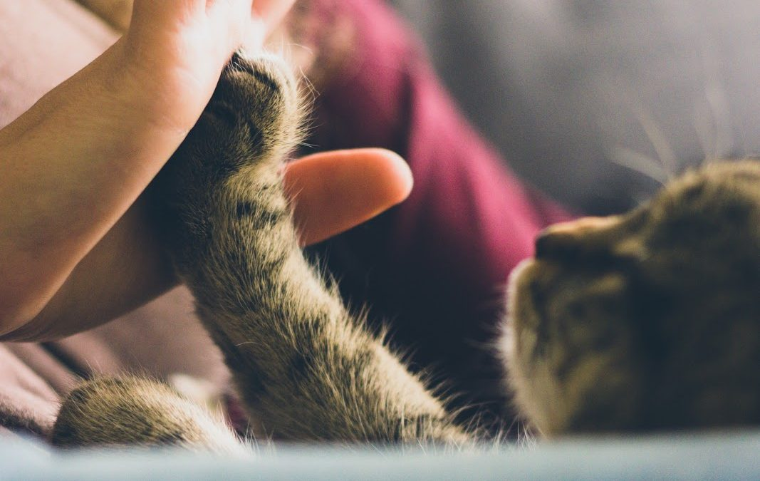 How Pets Improve Our Mental Health