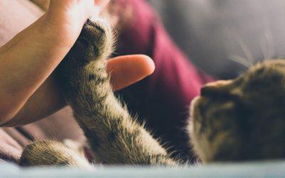 Cats improve mental health