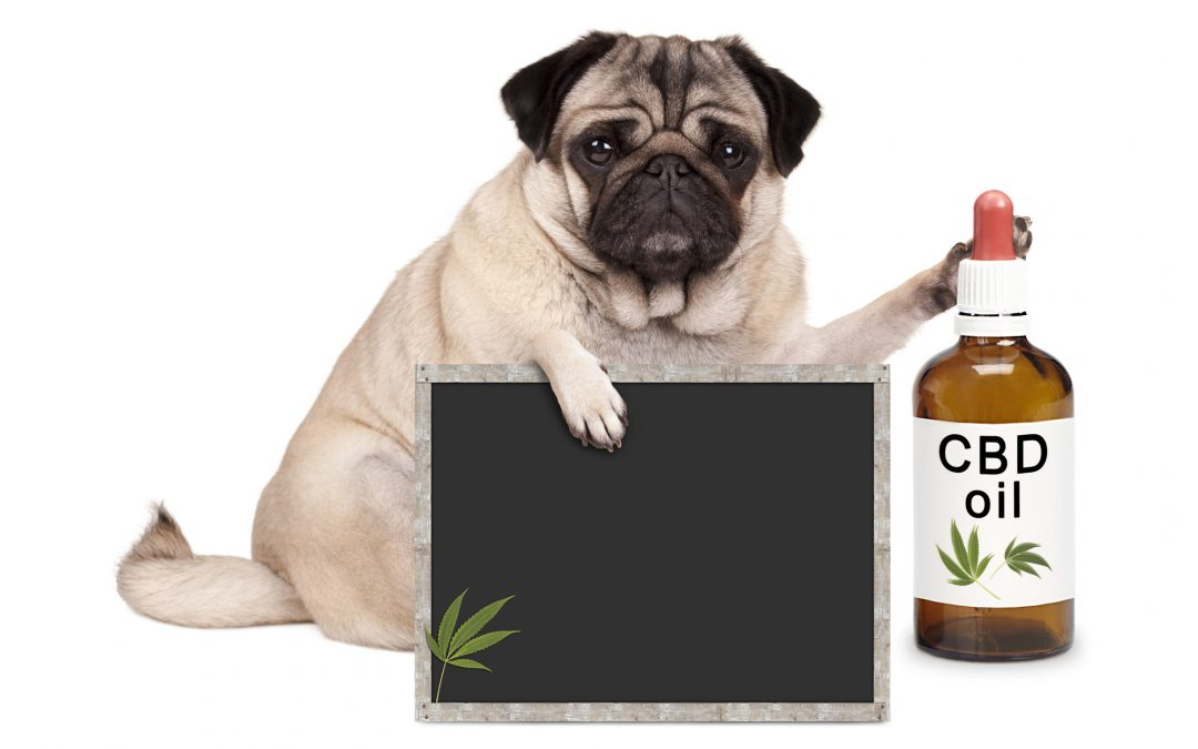 CBD Oil for a Healthy Dog