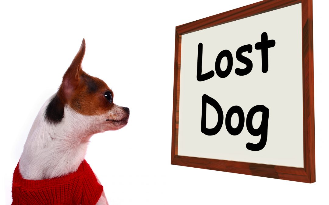 Tips on Printing Flyers to Find a Lost Dog