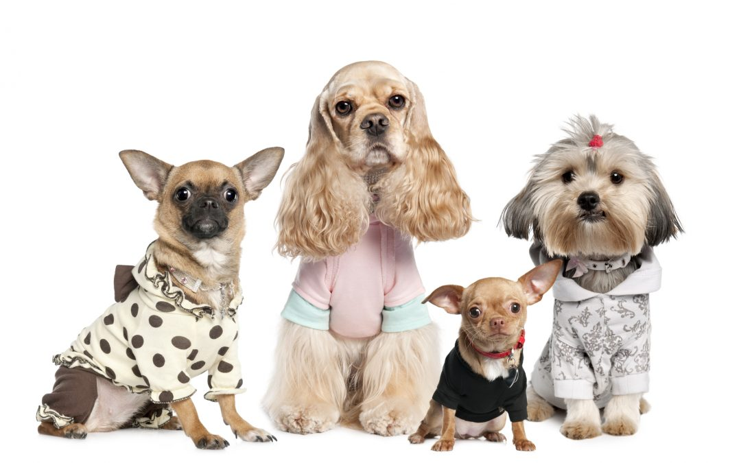 Top 6 Pieces of Clothing You Should Buy Your Dog Next Time You're in a Pet Retail Store