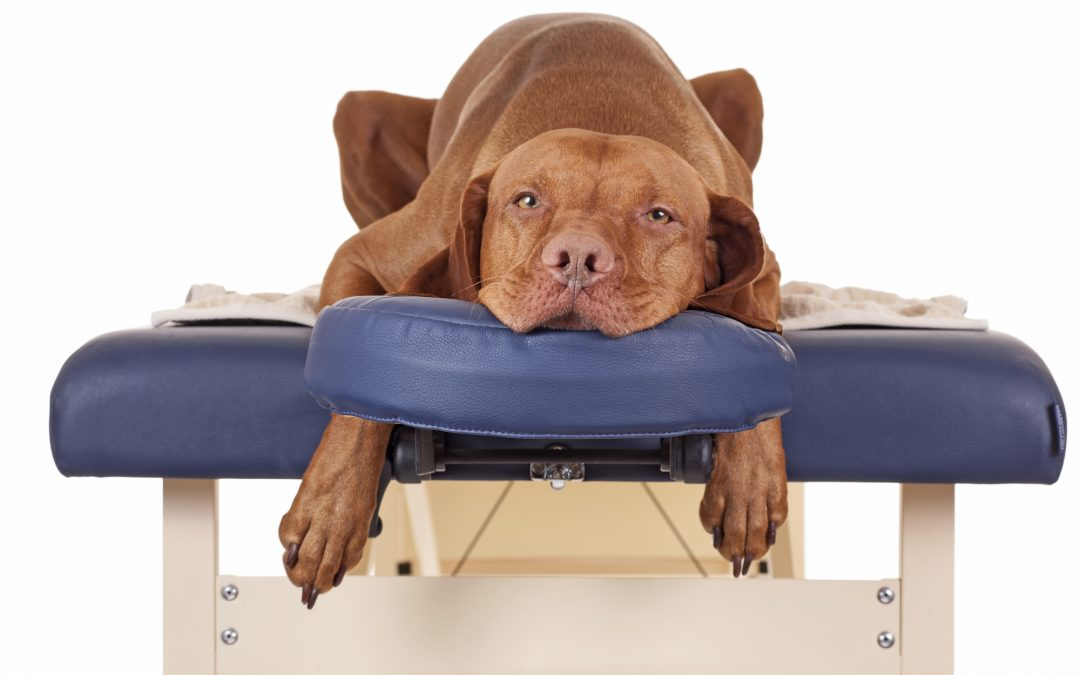 The benefits of dog massage: techniques owners can do at home for their dogs