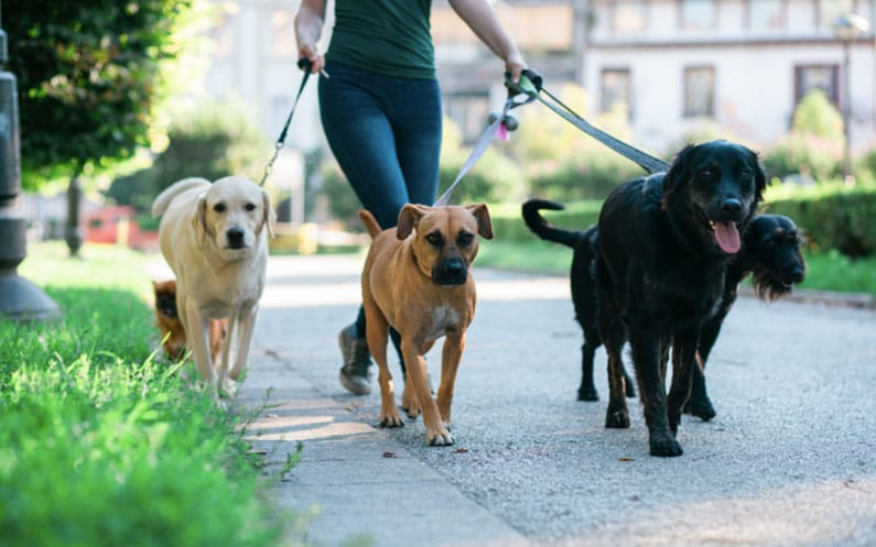 Keeping Fido Healthy: How to Find the Best Dog Walking Service