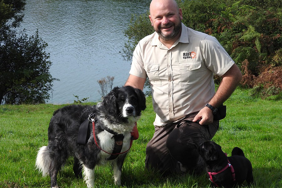 Love Dogs? What It Takes To Become a Professional Dog Walker