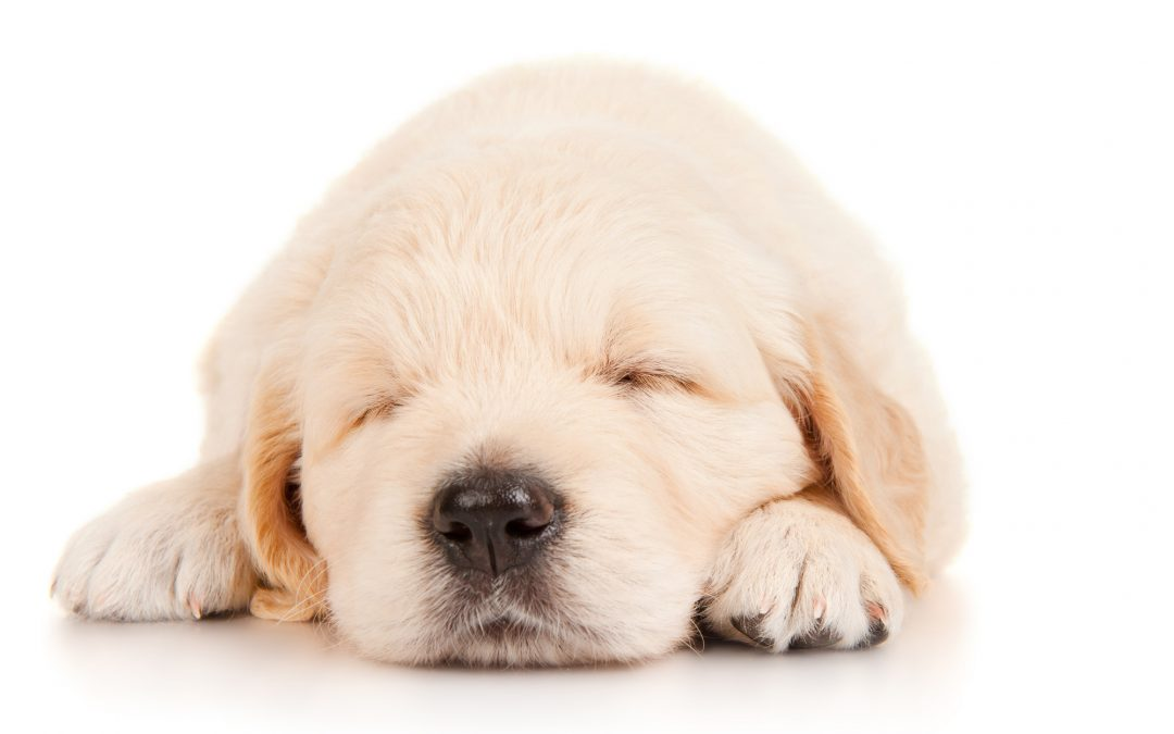 Keeping Your Puppy Safe in His First Year