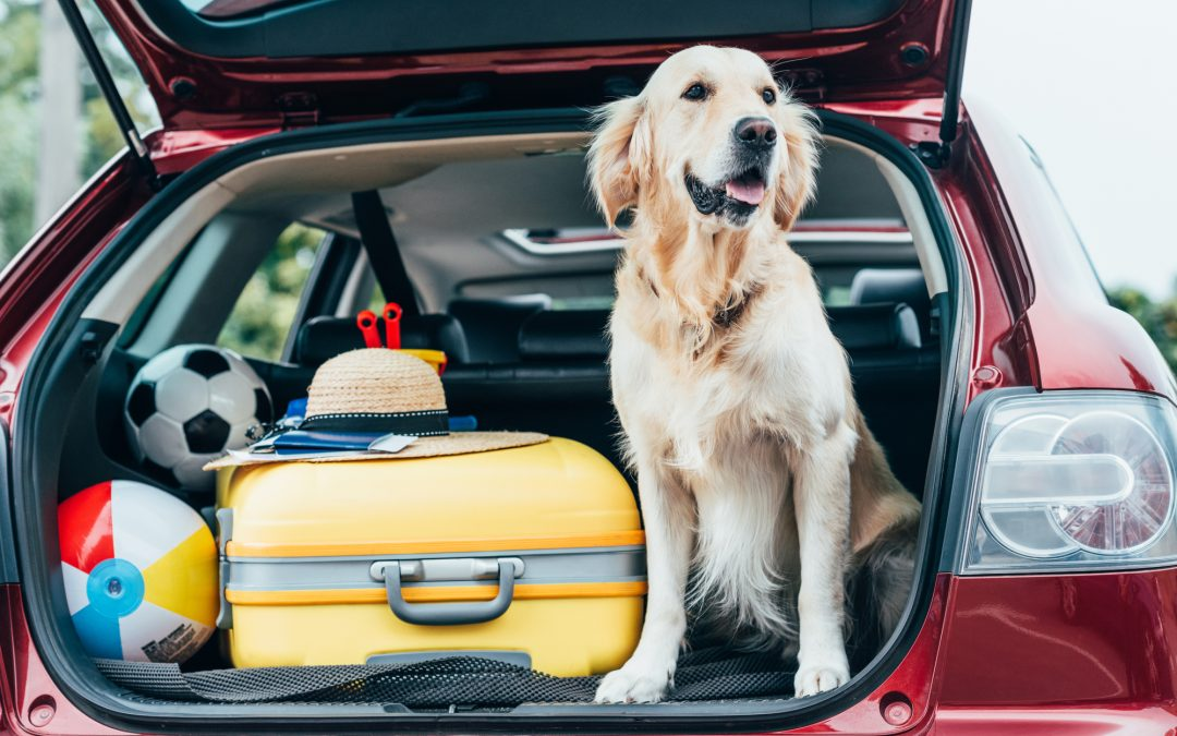 Tips For Traveling With Dogs in a Rental Car