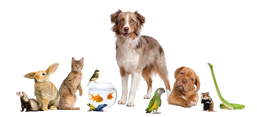 Pet Care Trends For 2021