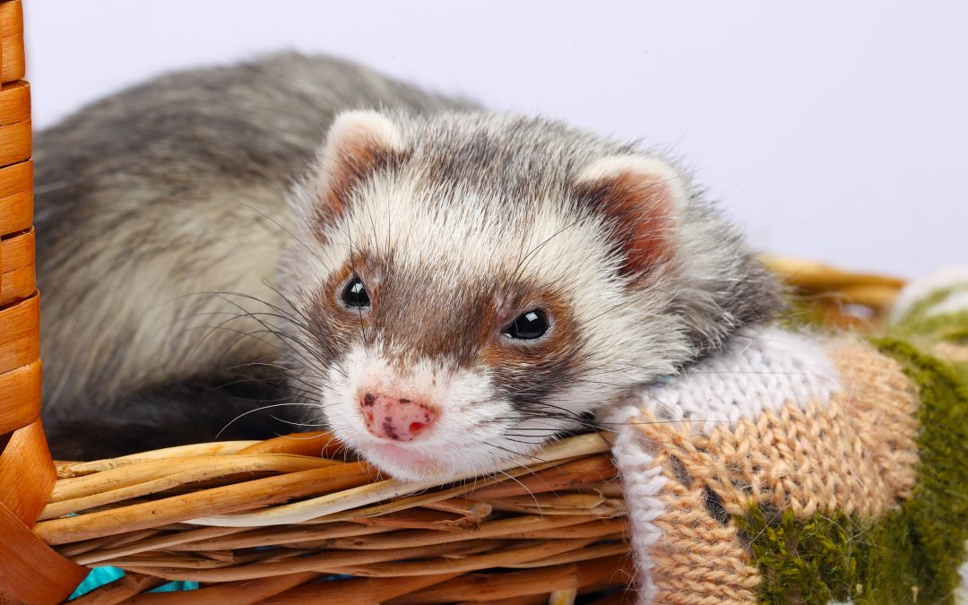 Do You Need a Pet Sitter for your Exotic Pet?