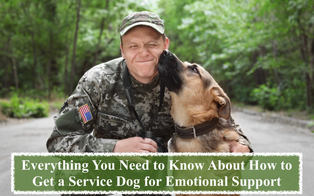 Everything You Need to Know About How to Get a Service Dog for Emotional Support
