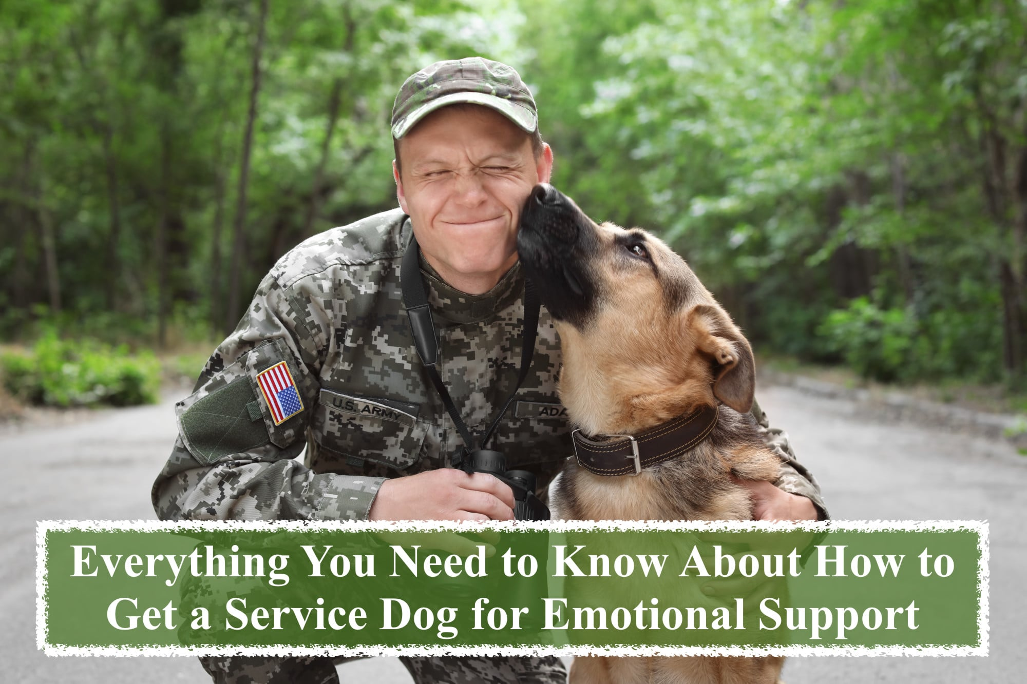 Everything You Need To Know About How To Get A Service Dog