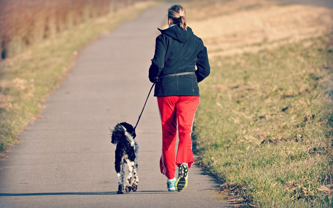 5 Ways To Make Sure Your Dog Gets More Exercise