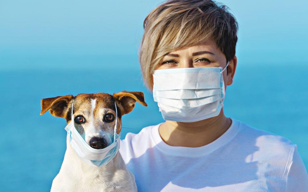 Love and Kisses Pet Sitting For Coronavirus Disease 2019